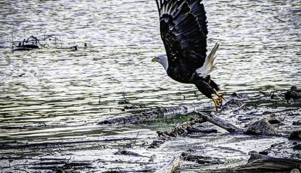 Eagle050315_1a-1