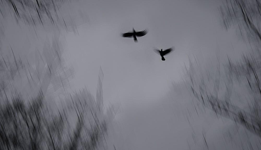 TwoBlackBirds-1-1
